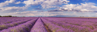 Lavendelseife in Herzform