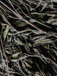 Salbei-Kräuterbonbons (gefüllt und gewickelt)